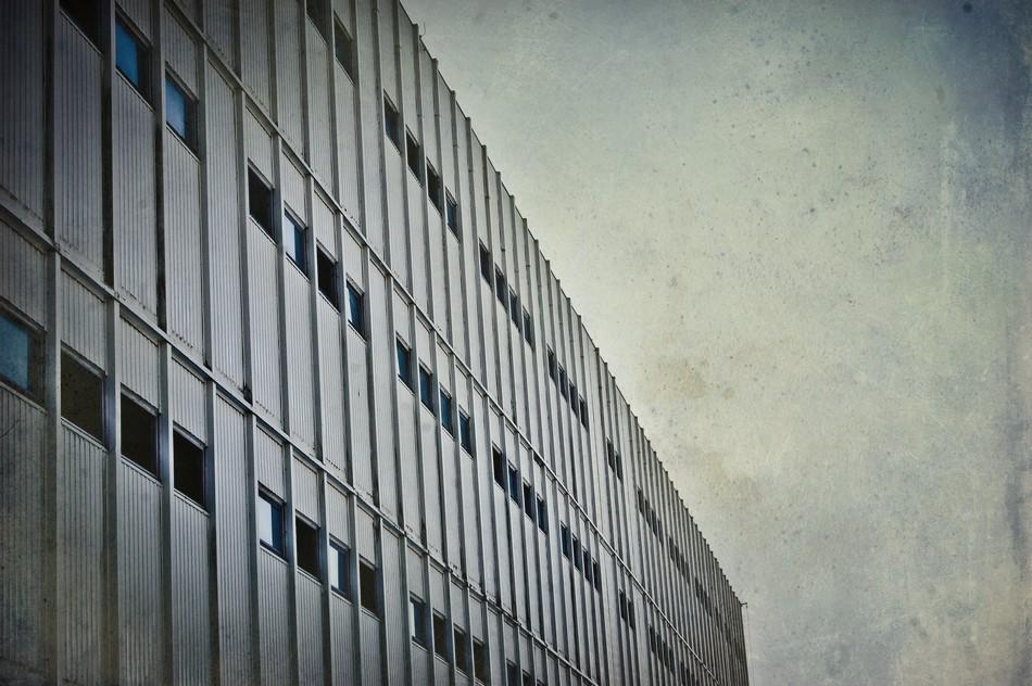 Szatniowce w Żarnowcu